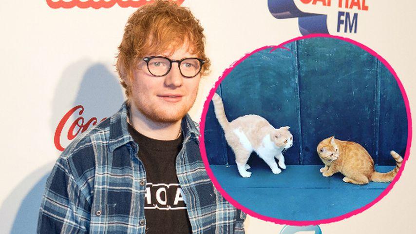 Ed Sheeran: Seine Katzen haben jetzt einen Insta-Account!