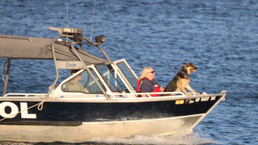 Ein Suchhund, der für die Suche nach Naya Rivera eingesetzt wird