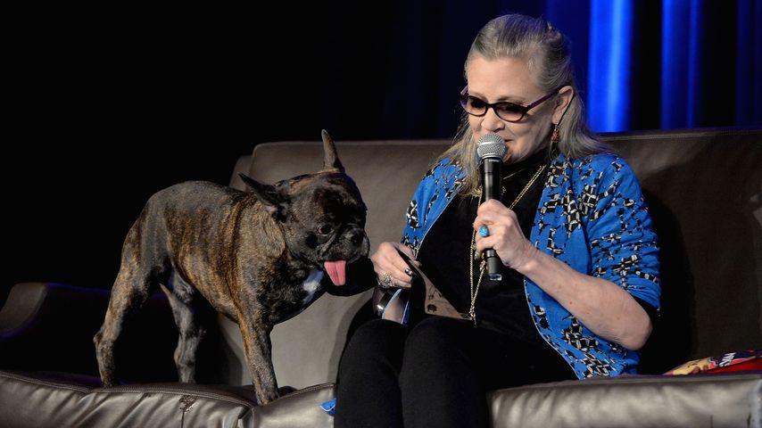 Gary und Carrie Fisher bei der Wizard World Comic Con 2016