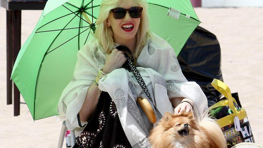 Gwen Stefani mit Hund Chewy am Strand