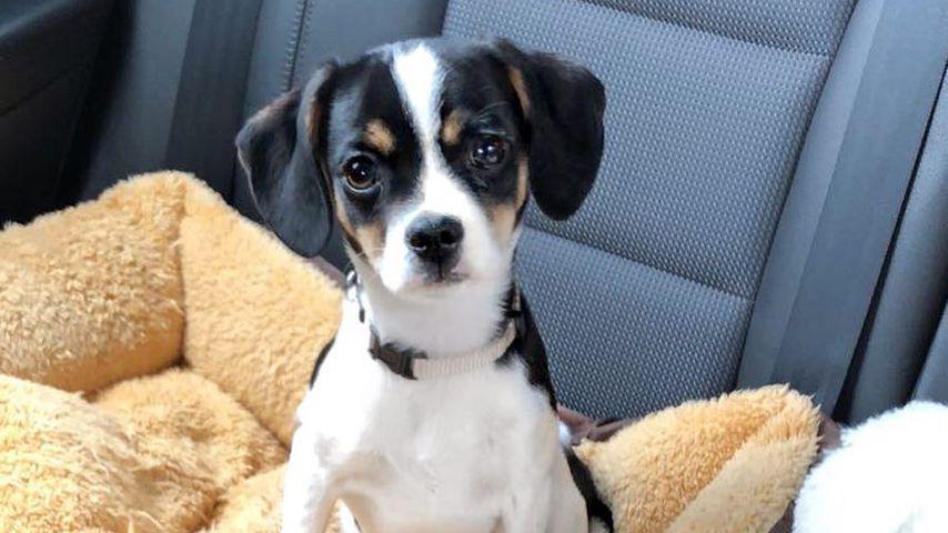 Harper, Hund von Jessica Paszka