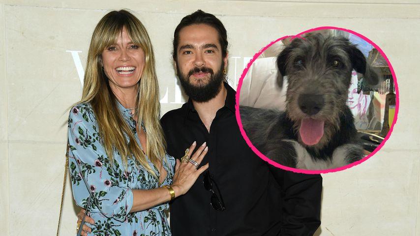 Hallo, Anton: Das ist Heidi Klums neues Familienmitglied