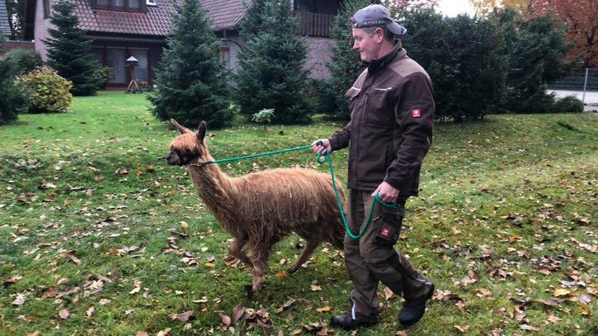 """Bauer sucht Frau""-Kandidat Henry im November 2018"