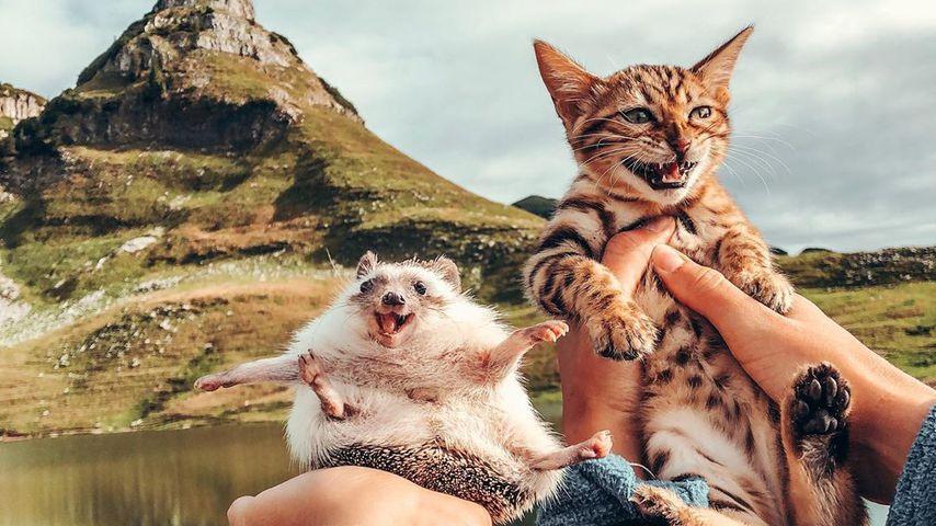 Nach Mr. Pokees Tod: Igel-Katzen-Duo sorgt für Begeisterung