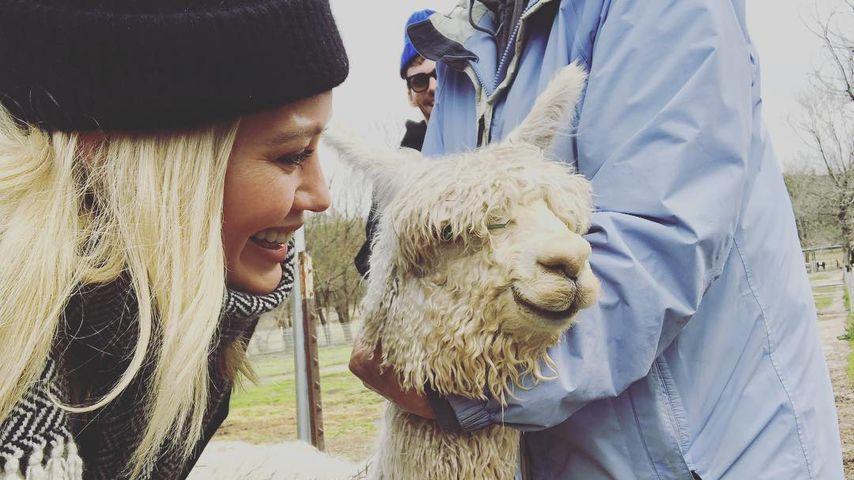 Ungewöhnlich: Hilary Duff bekommt Alpaka zum Valentinstag