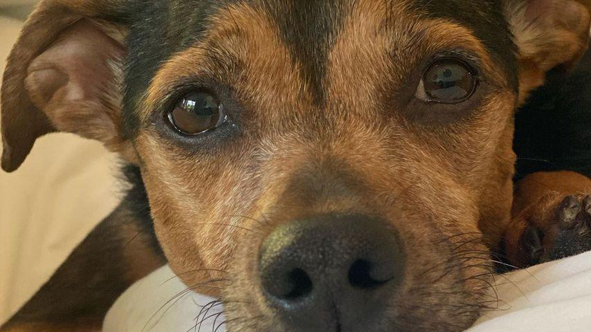 Hund von Ashley Greene