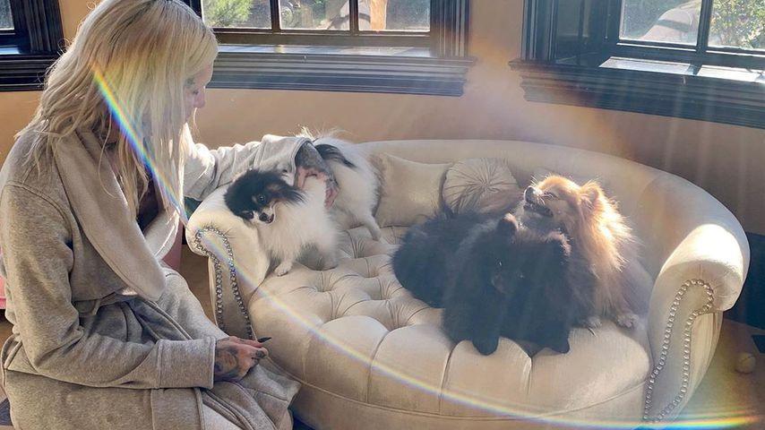 Jeffree Star mit seinen Pomeranians