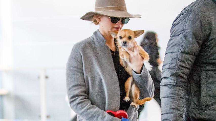 Jennifer Lawrence mit ihrem Hund Pippi am JFK