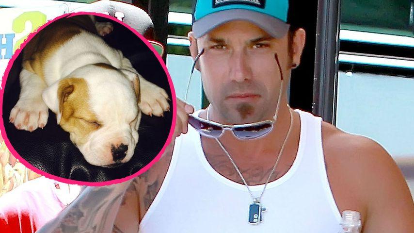Brutal: Warf Biebers Dad seinen Hund vom Balkon?