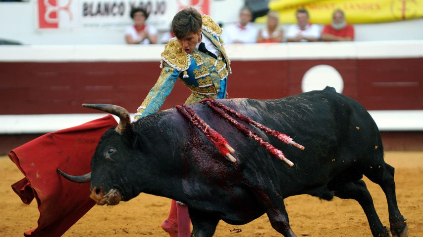 Juan Leal, Stier-Kämpfer