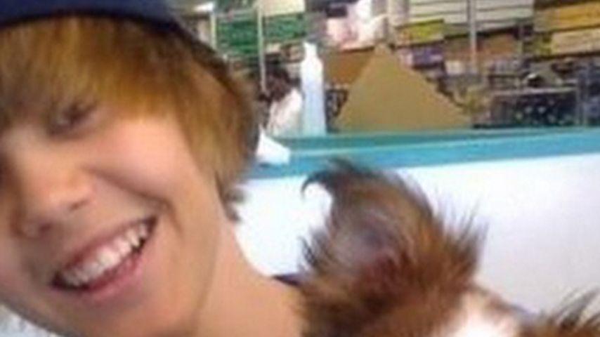 Trauer: Justin Biebers Hündchen Sammy ist tot!