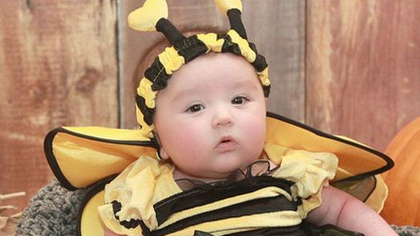 Honigsüß! Wer ist diese süße Halloween-Hummel?