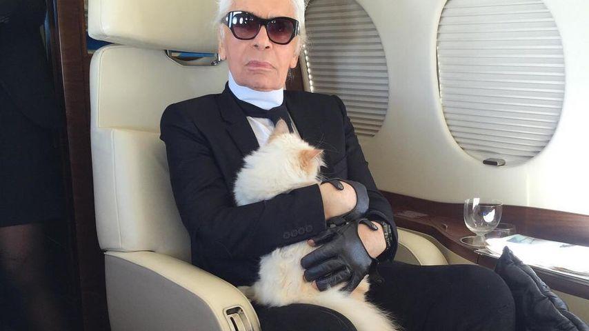 20 Kilo Katzenstreu: Karl Lagerfeld & Choupette in Hamburg