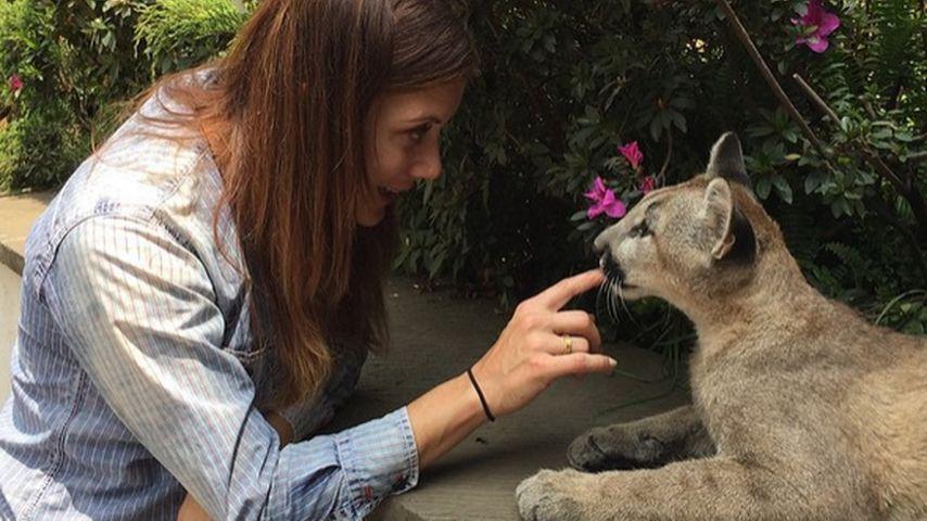 Stolze Löwen-Mama! Kate Walsh hilft Wildkätzchen