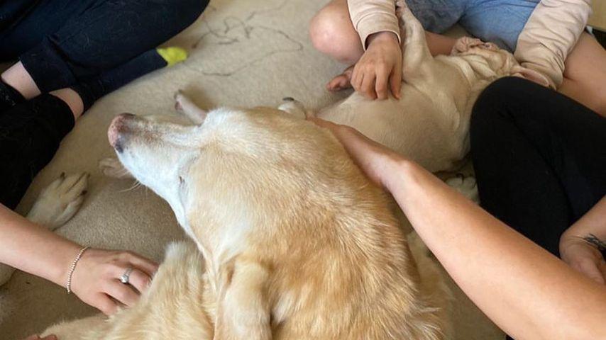 Kerry Katonas Kinder mit Hund Paddy