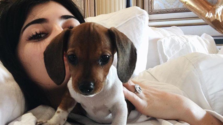 """Kylie Jenner nennt ihre Hunde """"Babys"""": So denkt ihr darüber!"""