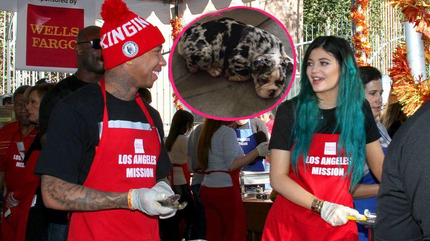Kylie Jenner & Tyga: Gemeinsamer Welpe für 50.000 Dollar!