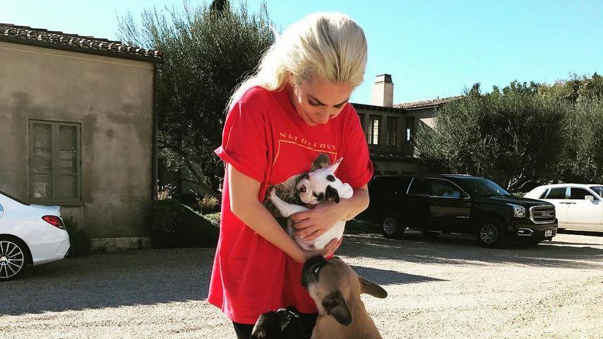 Nachwuchs bei Lady Gaga: Babyhunde vor Trennung gerettet!