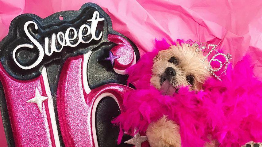 Kuchen-Geschlabber! So feierte Marnie the Dog 16. Geburtstag