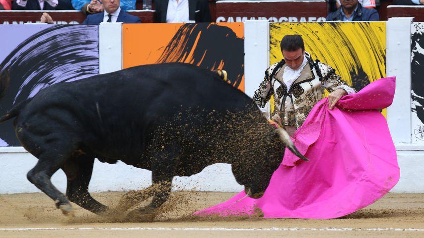 Schwer verletzt: Berühmter Matador von Stier aufgespießt!