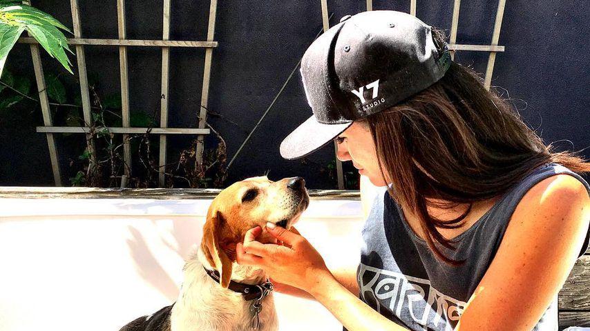 Herzogin Meghan und ihr Hund Guy