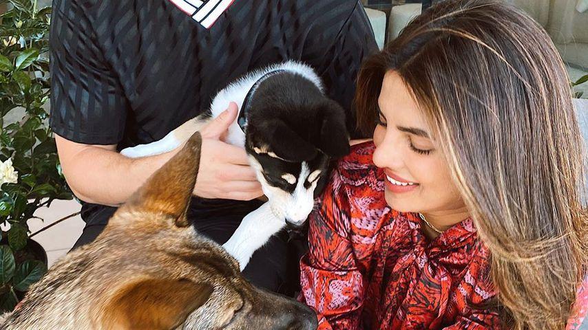 Nick Jonas und Priyanka Chopra mit ihren Hunden