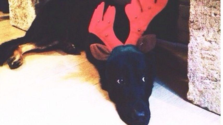 Ohje! Dieser Promi-Hund trauert Weihnachten nach