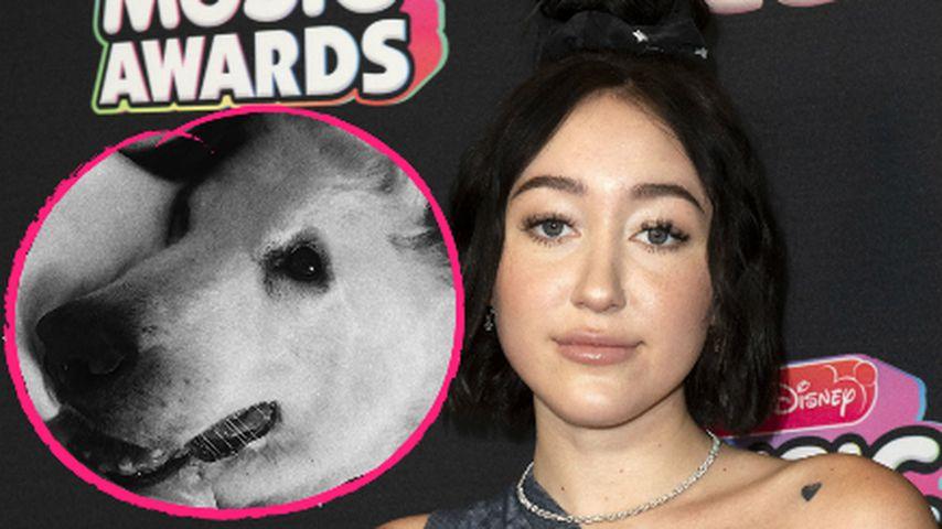 Noah Cyrus nimmt Abschied: Ihr Familienhund ist gestorben