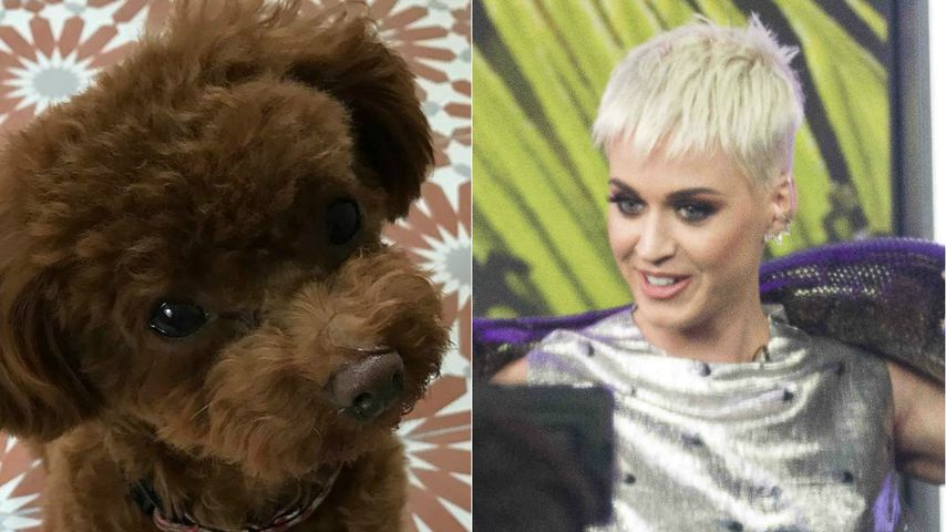 Nugget-Konkurrenz? Katy Perry kuschelt mit Riesen-Schlange!