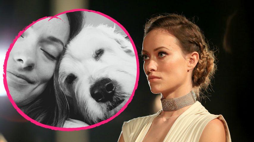 Trauer an ihrem Geburtstag: Olivia Wildes Hund gestorben