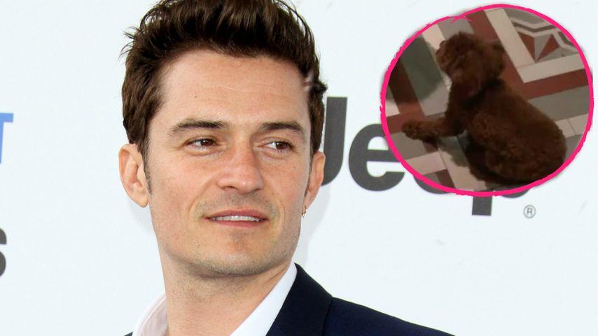 Trotz Trennung! Orlando Bloom spielt noch mit Katys Hund