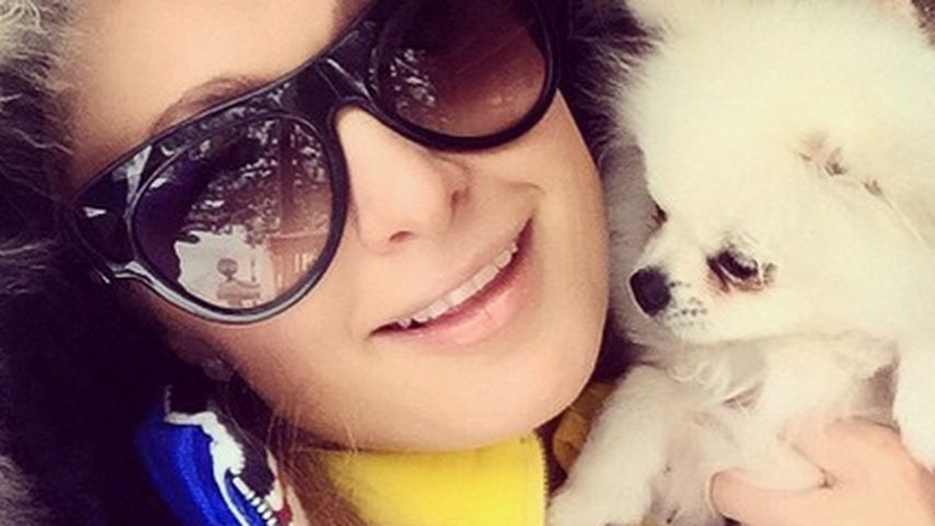 Herzerwärmend! Paris Hiltons Hund entdeckt Schnee