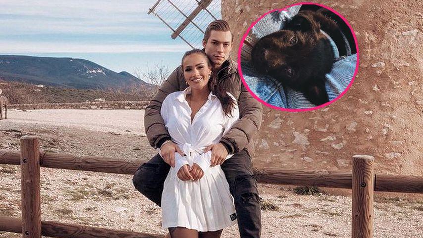 Enthüllt: So heißt Henrik und Paulinas süßer Hundewelpe