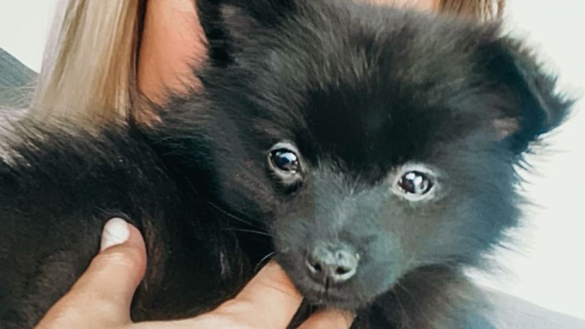 Jessica Fiorini präsentiert stolz ihren Pomeranian-Welpen Yarra