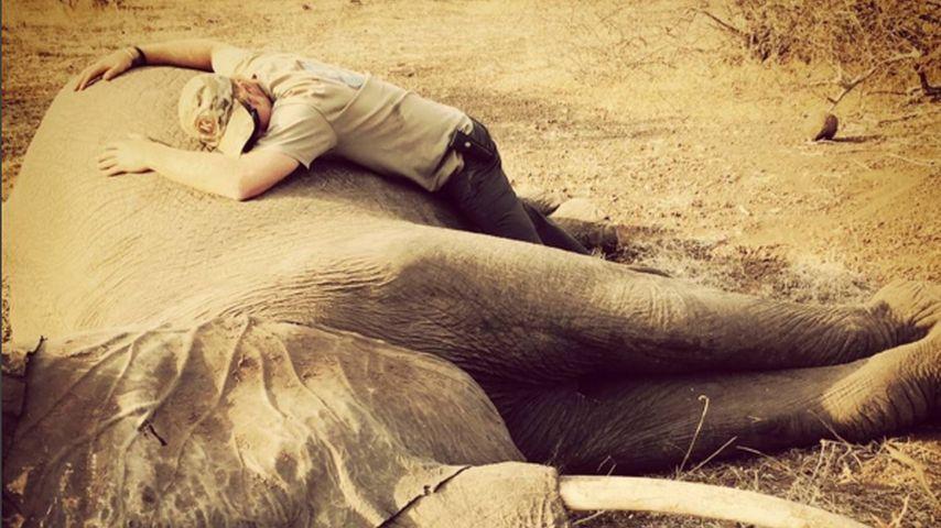 Gegen Wilderei: Prinz Harry kuschelt mit einem Elefanten