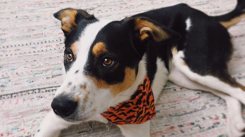 Reese Witherspoons Hund Benji