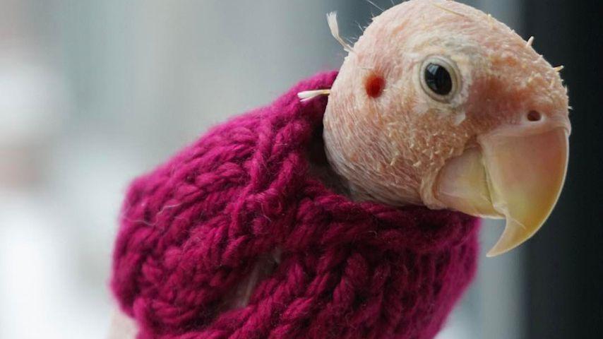 Trauer um tierischen Netz-Star: Nackt-Papagei Rhea ist tot!