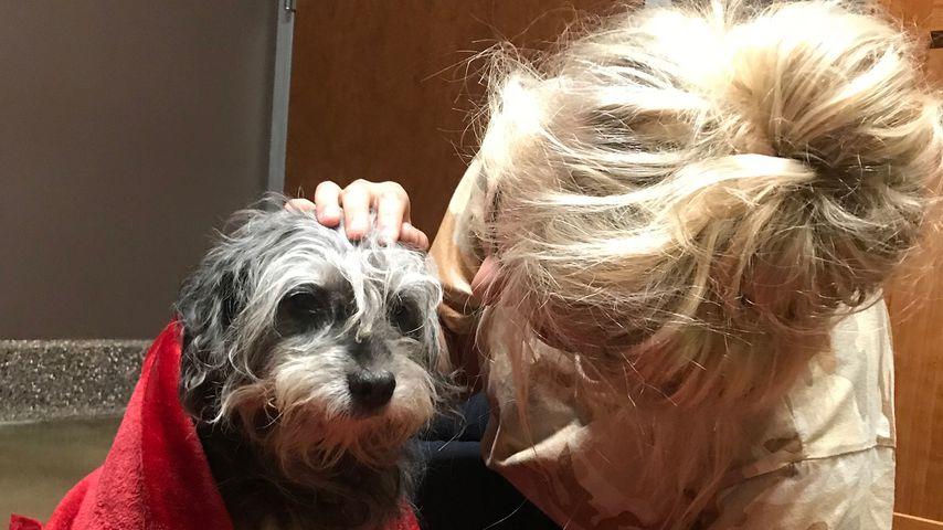 Herz für Tiere: Sarina Nowak rettet Straßenhund das Leben!