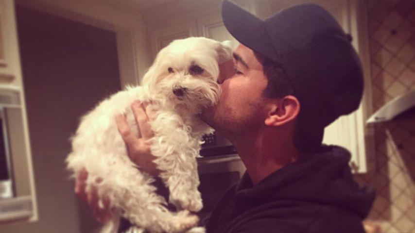 Trauer bei Schauspieler Taylor Lautner: Sein Hund ist tot!