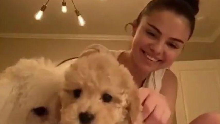 Selena Gomez mit ihren Hunden Winnie und Daisy im März 2020