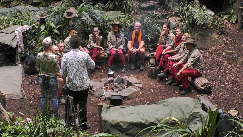 Nullrunde im Dschungelcamp: Was passiert mit den Anrufen?