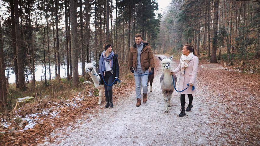 Stephie Stark, Niko Griesert und Karina Wagner bei einem Bachelor-Date