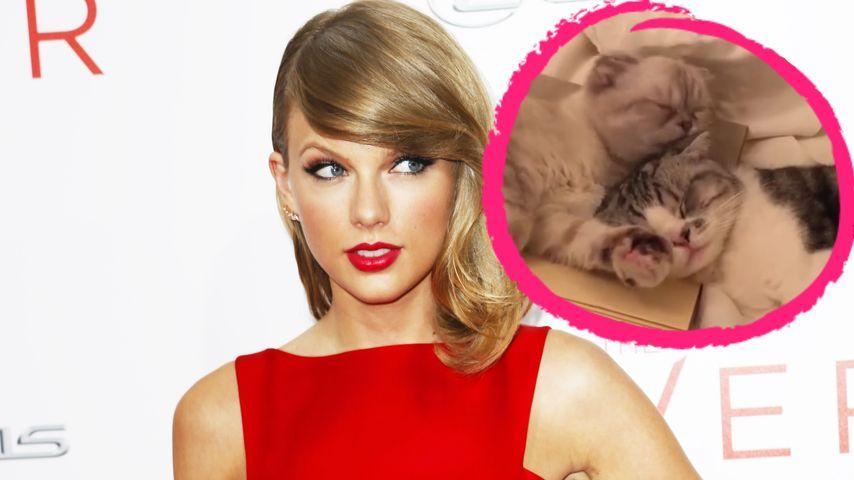 Niedlich: Taylor Swifts Kätzchen auf Kuschel-Kurs