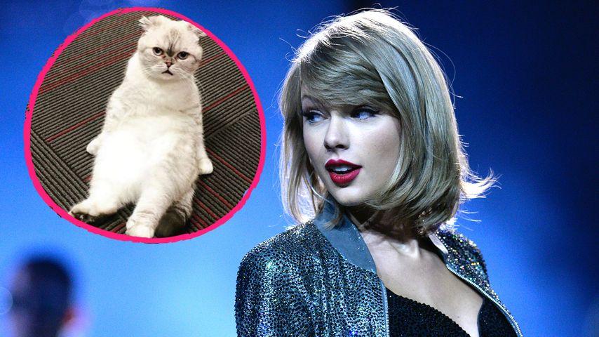 Katzen-Mutti Taylor Swift: Tierisches Foto aus der Garderobe