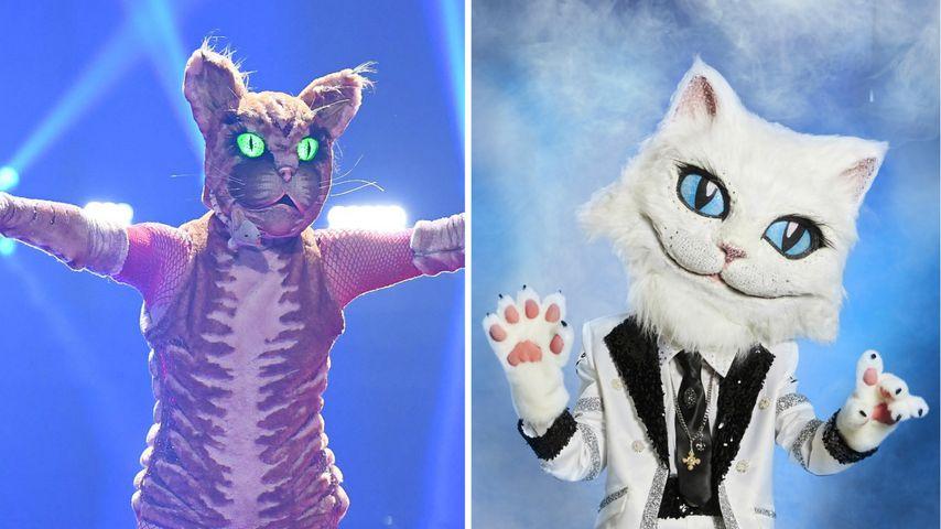"""""""The Masked Singer""""-Vergleich: Welche Katze ist cooler?"""