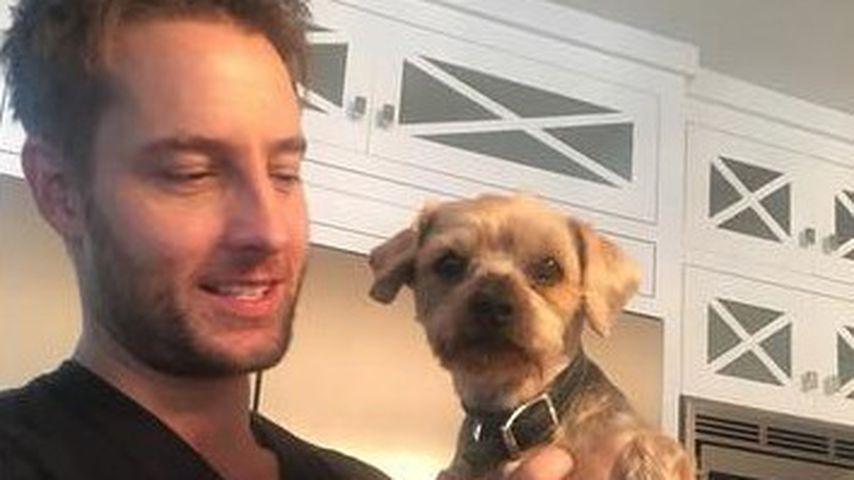 """Trauer ums Haustier: """"This Is Us""""-Star beweint toten Hund"""
