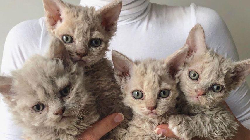 Total fluffiges Fell: Diese Kätzchen erobern Instagram!