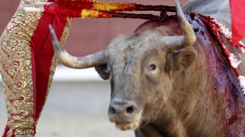 Torero aufgespießt: Stier getötet und seine Mutter bald auch