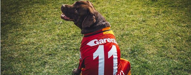 Poldis Hund im Fußballtrikot